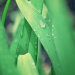 Tratamiento repagen body algas de tiempo para ti